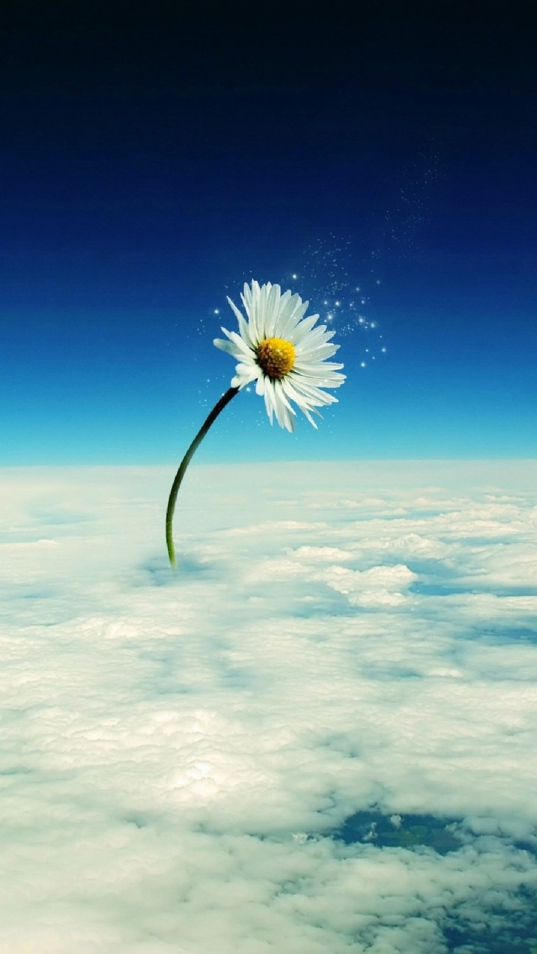 One White FLower sky sun nature HD iPhone Wallpapers