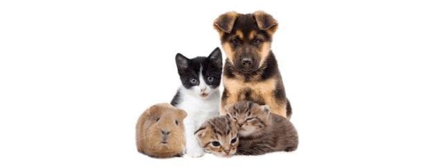 https://i2.wp.com/psyendo.com/wp-content/uploads/2019/10/Mascotas.png?w=640&ssl=1