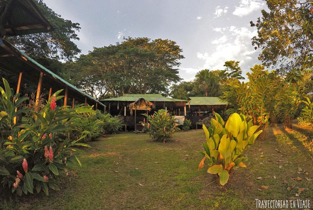 Selva amaznica colombiana das de paz y noches de terror