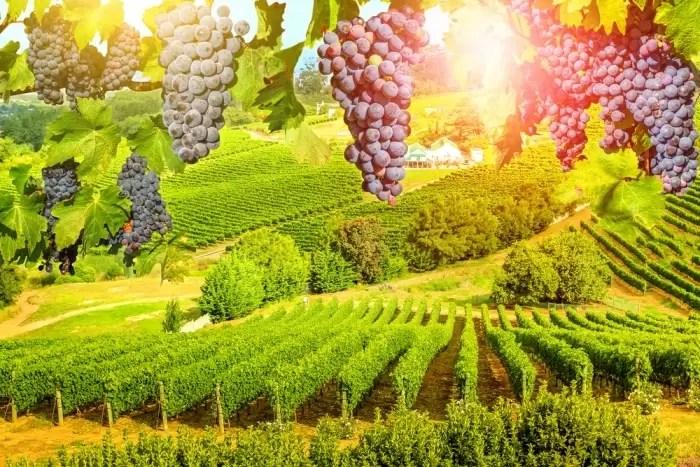 Degustacja wina podczas wyjazdu incentive.