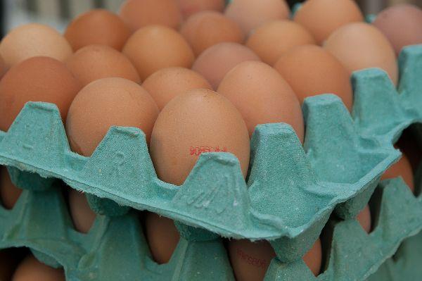 Eier-Skandal: Gefahr für Verbraucher  gebannt