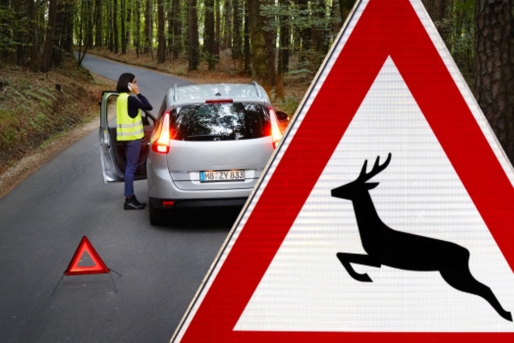 Wildunfall: Wer zahlt eigentlich den Schaden, wenn Bambi ins Scheinwerferlicht springt?