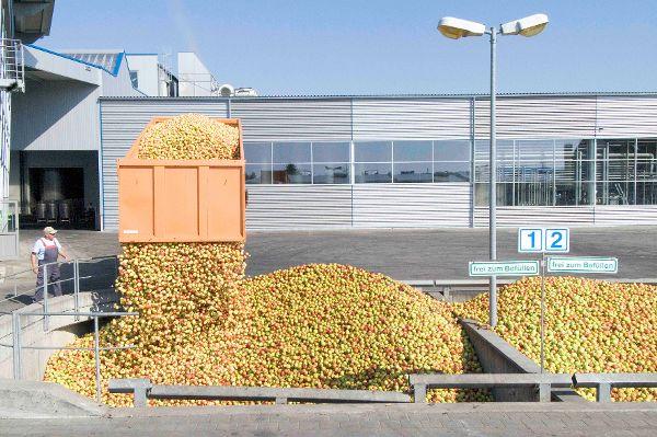 Über 1 Millionen Tonnen Streuobst werden zu Saft verarbeitet