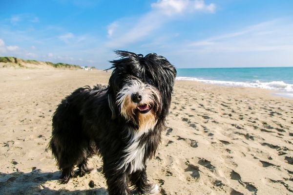 - Ein vorbeugender Floh- und Zeckenschutz gehört zwingend zu den Vorbereitungen bei Reisen mit dem Hund. © Bundesverband für Tiergesundheit e.V./ TRD Medizin und Gesundheit Tauchte das Virus früher vor allem in bestimmten Gebieten, zum Beispiel in Bayern und Baden-Württemberg auf, warnen
