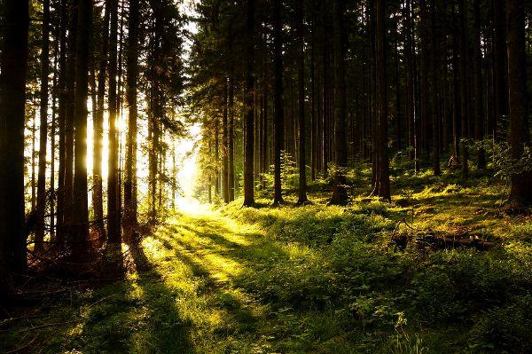 Wald in Privatbesitz