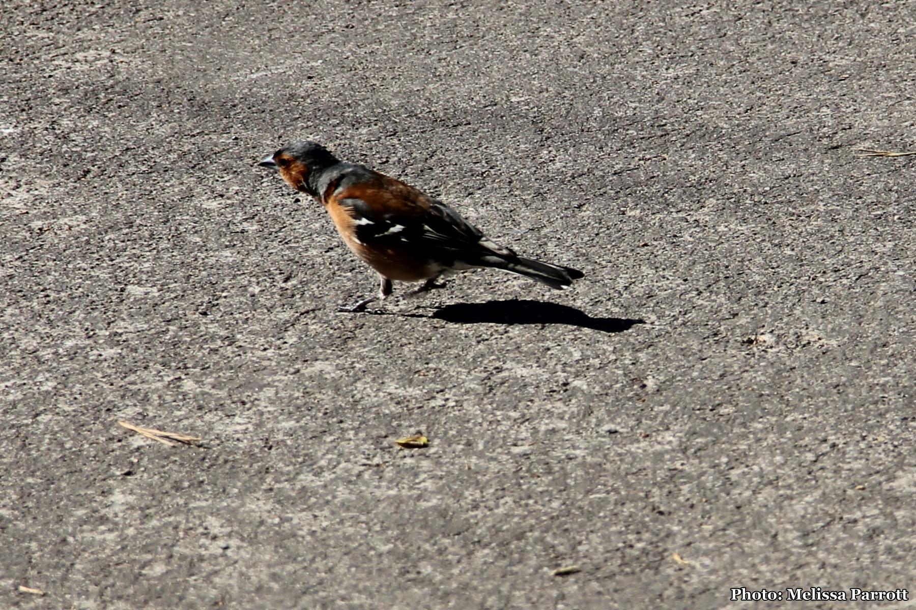 Little bird on Bridge St.