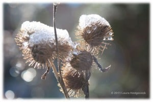 Life challenge prickly and cold