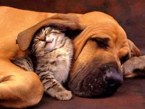 Unexpected friendship between cat and dog