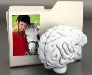 A folder, brain and picture illustrating why we remember somethings but not others