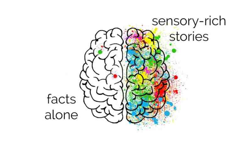 Authors illustration of brains on stories