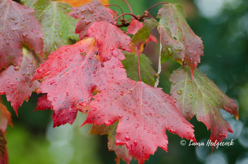 Fall leaves and fall beauty story prompt