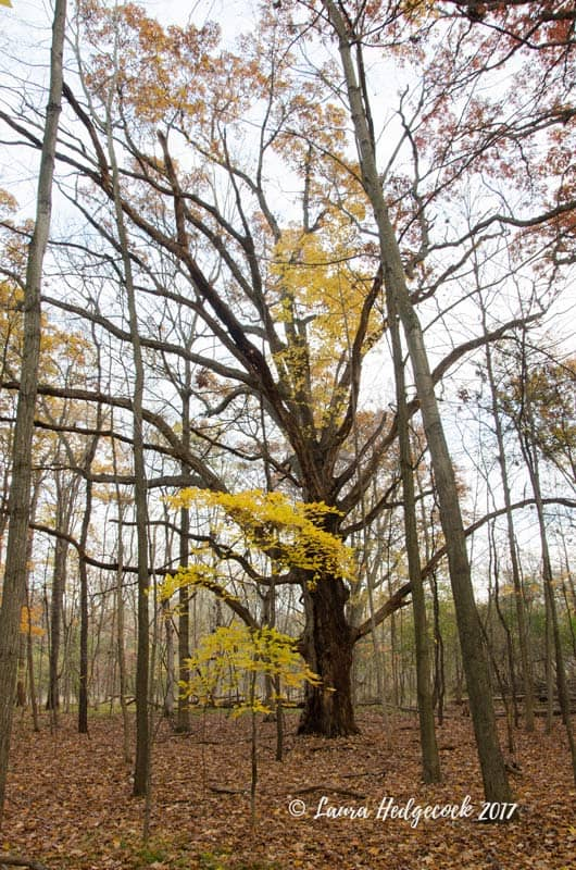 Fall tree in the forest