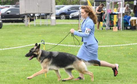 We supply leads & collars for training classes. Wholesale pricing available