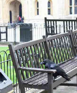 Best things to do in London with kids - see the ravens at The Tower of London