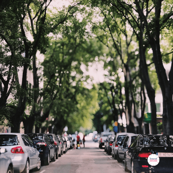 cars parked on tree lined street for Over 100 Ways to Save Money