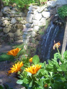 Wild flowers at one of the spring water fountains.