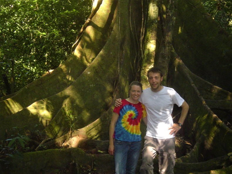 The trees in the Amazon Rainforest are huge!