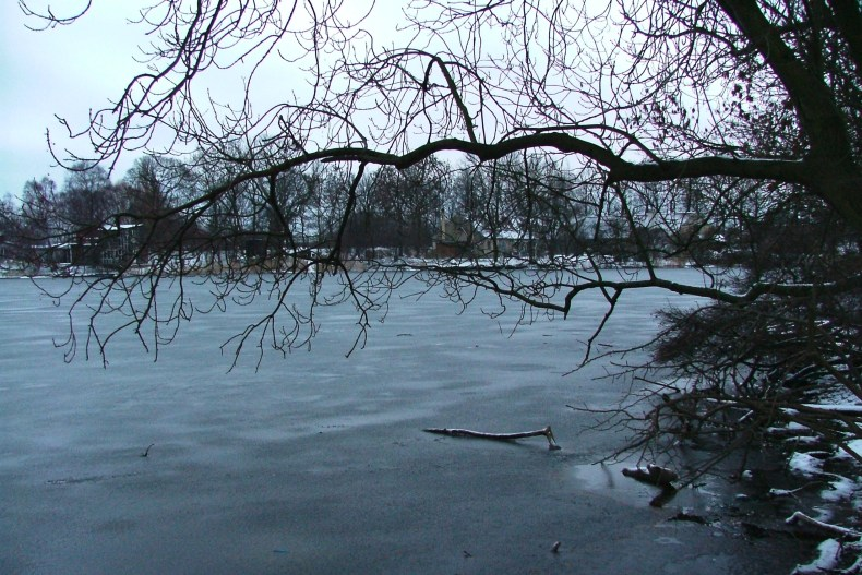 Tree branch over Lake Stadsgaven in Freetown Christiania.