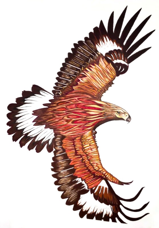 """""""Immature golden eagle in flight"""", colored pencil on paper"""