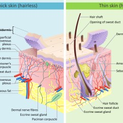 Layers Of The Sun Diagram Cub Cadet Wiring Lt1046 How Does Damage Skin Southeast Radiation