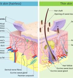 how does the sun damage skin southeast radiation oncology group hearing damage diagram damage skin diagram [ 1438 x 1029 Pixel ]