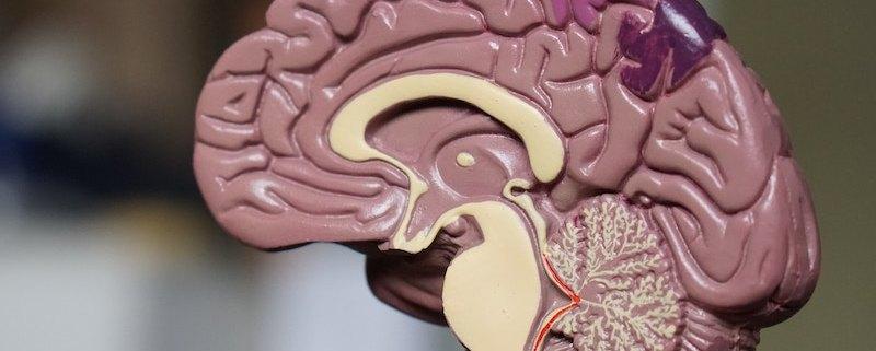 Brain tumor awareness month.