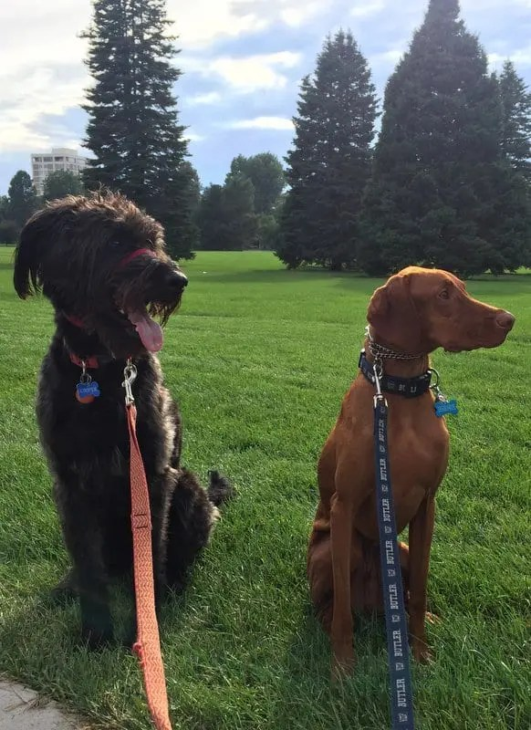Bernie and Cooper in Cheesman Park Denver