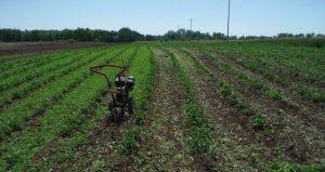 Organic Field Rototiller 1