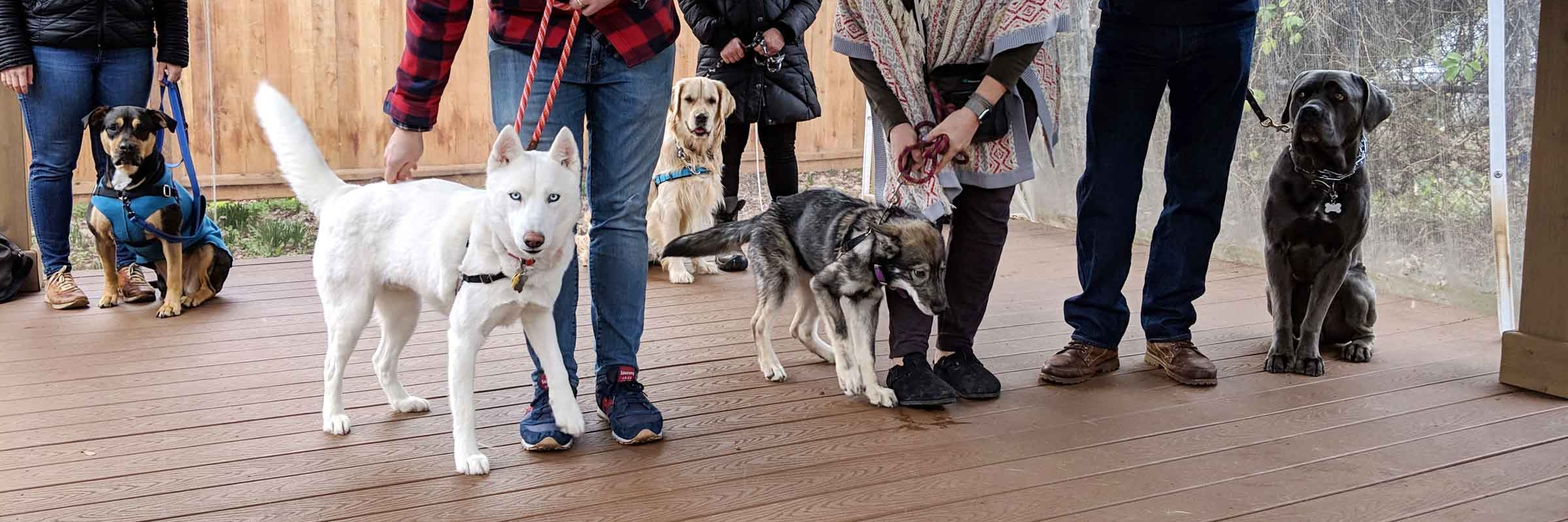 Dog training class held at Tré Bone