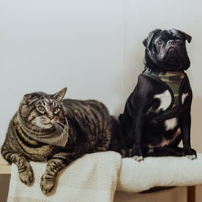 Dog and cat grooming supplies, recently bathed cat and dog