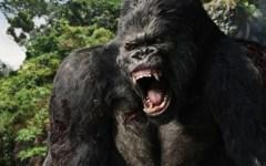 King Kong | História vai ganhar musical na Broadway em 2018