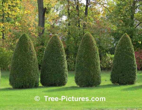 cedar tree landscaping property