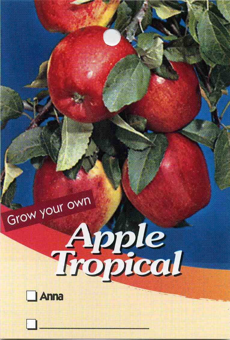 Apple Tropical Anna Well Suited To Sub Tropical Areas