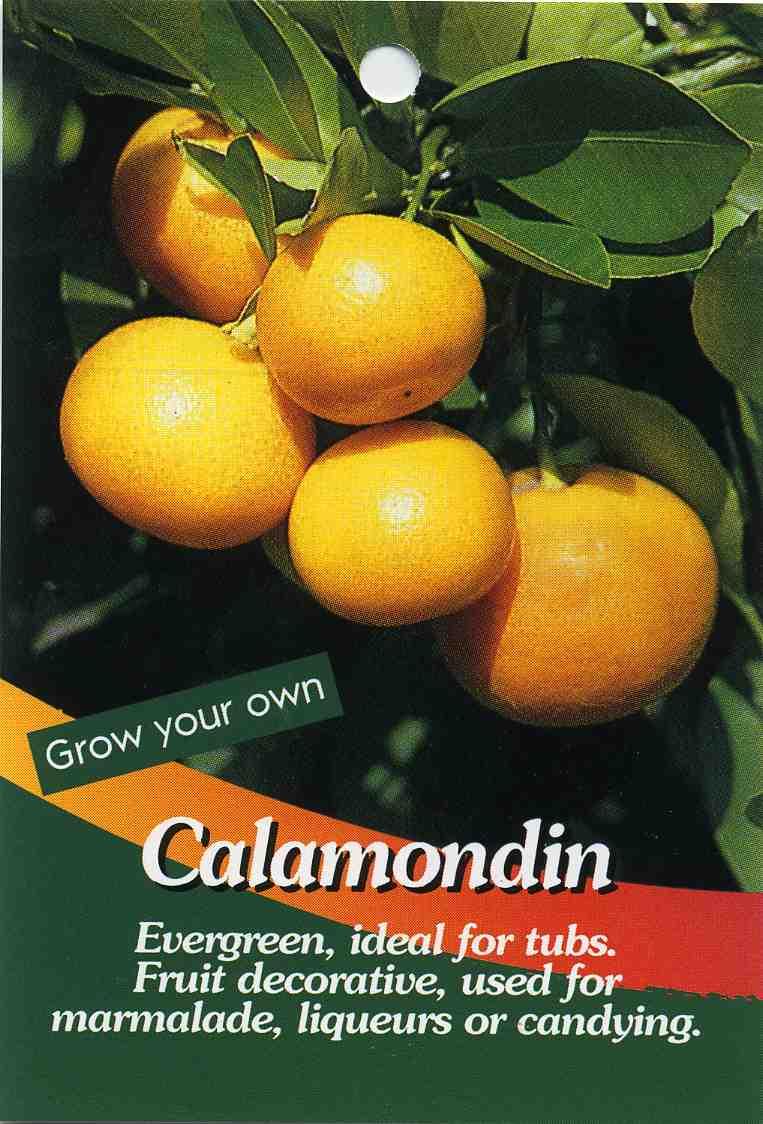 Kumquat Calamondin Fortunella Species