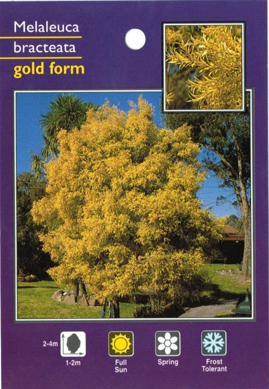 Tag Gold Form Melaleuca Bracteata