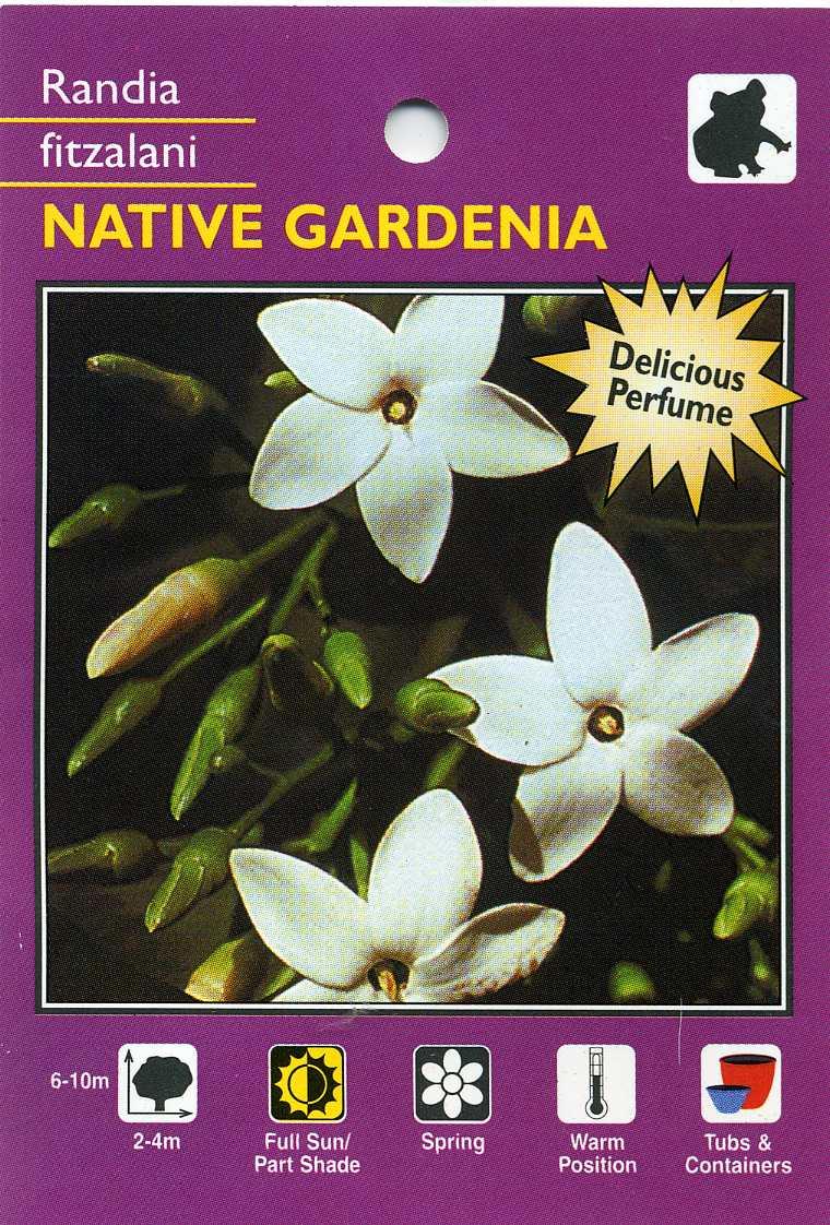 Native Gardenia  Randia Fitzalani