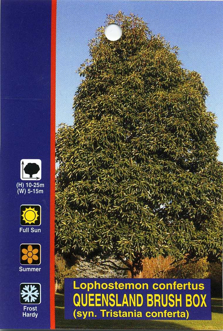Queensland Brush Box Lophostemon Confertus
