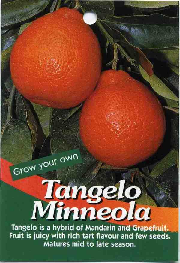Tangelo Minneola Buy Tangelo Minneola Tangelo Is A Hybrid