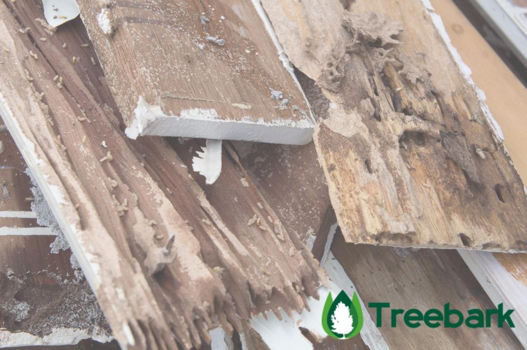 termite-damage-rotten-wood-eat-nest-dest