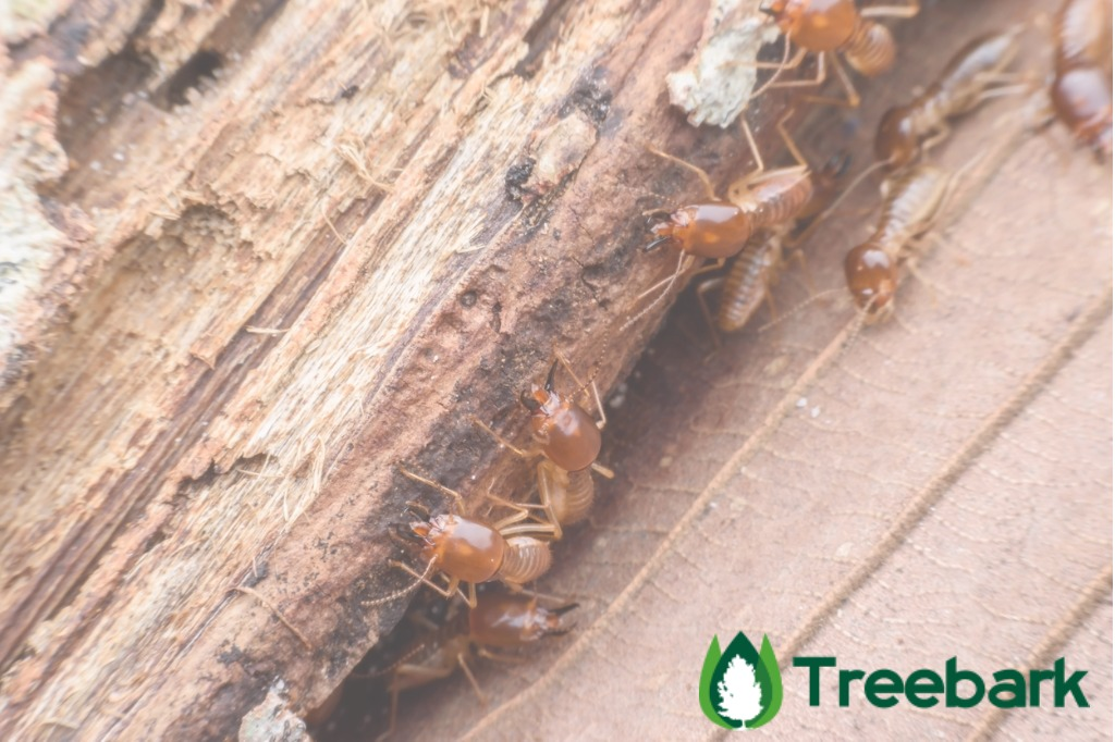 termites-eating-rotted-wood-picture-id62