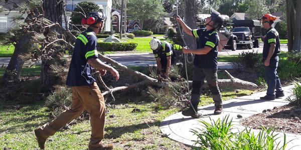 Tree Service St Augustine & Jacksonville, Fl  Treeco