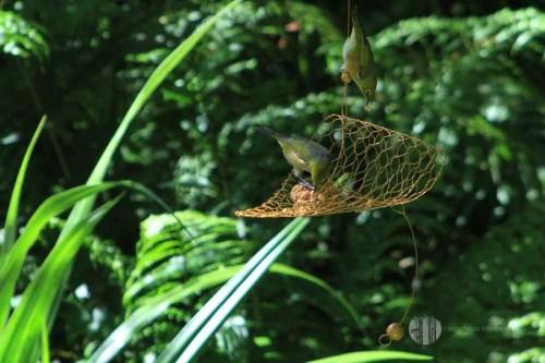 Cuff Tree Earring Bird Feeder