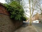 Brendan Tree Feller - Ivy Clearance Job - the Park, Nottingham - Photo 04 - before