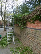 Brendan Tree Feller - Ivy Clearance Job - the Park, Nottingham - Photo 06 - at work