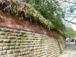 Brendan Tree Feller - Ivy Clearance Job - the Park, Nottingham - Photo 08 - after