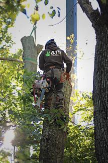 Adam geared up in tree
