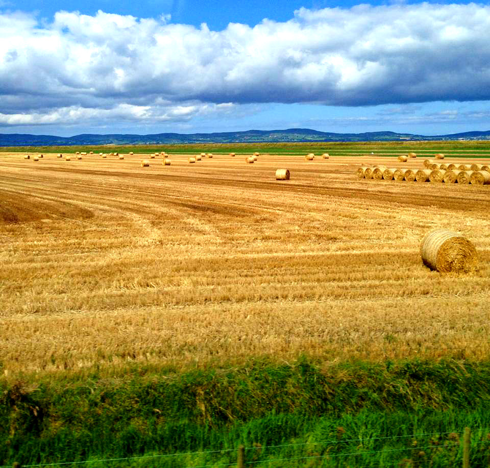 Field of Gold in Northern Ireland