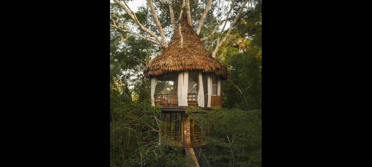 treehouse two