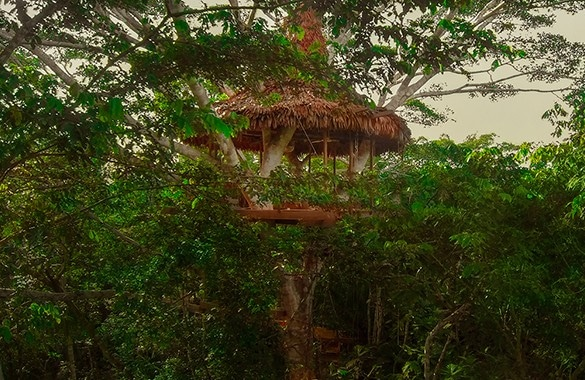 View of Treehouse 8 at Treehouse Lodge