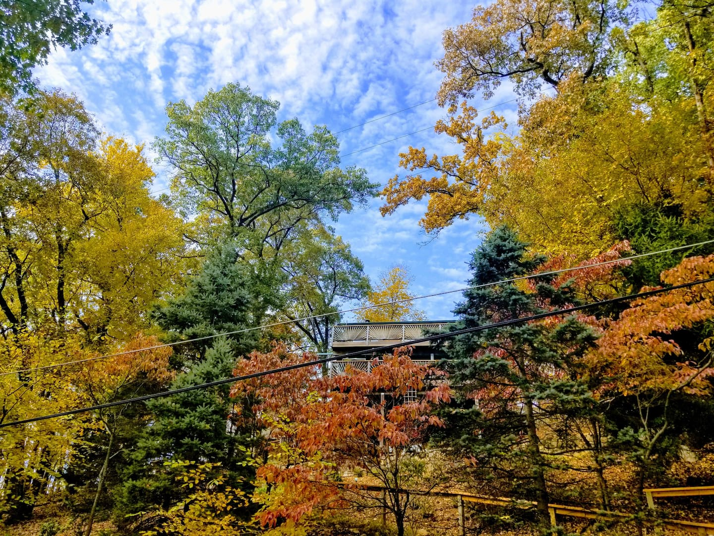 Cedar Lake Treehouse Airbnb New Jersey